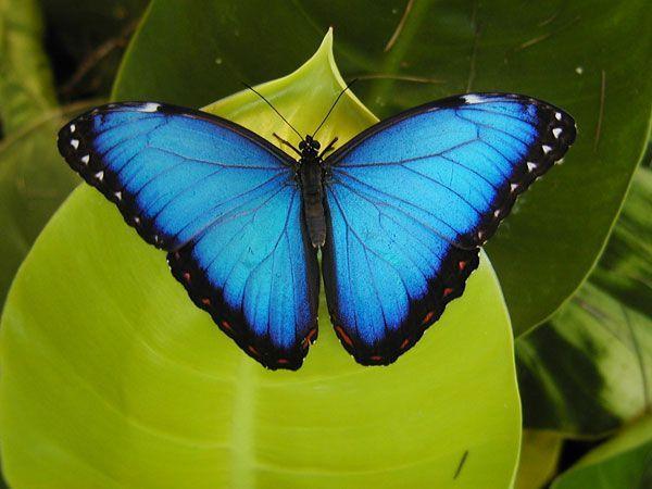 Couleur bleue - Couleur bleu ou bleue ...